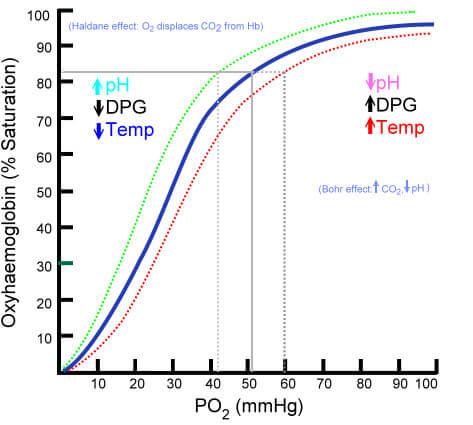 Oxy-Hemoglobin Dissociation Curve Bohr Effect