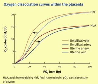 Oxy-Hemoglobin Dissociation Curve double haldane effect