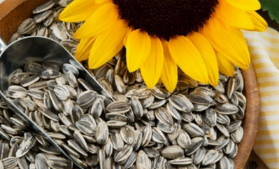 Sunflower Seeds – Nutrition Facts and