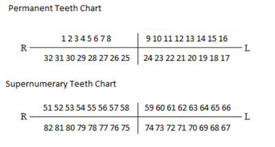 Supernumerary Teeth Numbering Chart Photo