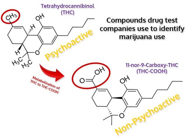 THC vs. THC-COOH