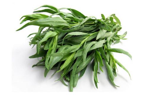 Tarragon Plant picture